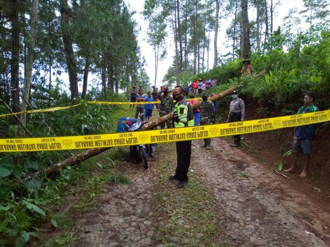 Tertimpa Pohon Tumbang, Pedagang Cilok Meninggal Dunia